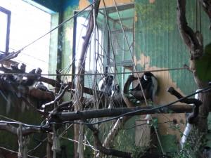 Apor på skansen
